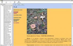 http://i4.imageban.ru/thumbs/2018.07.17/bdf6bee79e696f469e5f158097031397.jpg