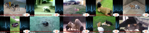 66ec5101f863f0ae093dc280ce18c1b6 - Dog Mating Compilation+Animal Sex Hd Mp4