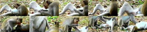 c3cd2fddfc3471b9f788cc6c272930bb - How To Enjoy Animal Sexy