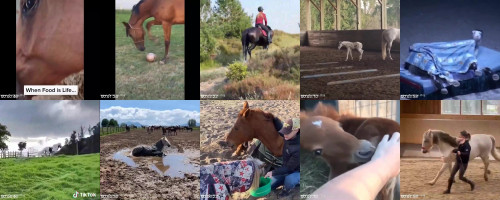 d5c927de3e87d90b7a7f027f01010b92 - Sexy Horse! Cute And Funny Horse Videos Compilation Cute Moment 28
